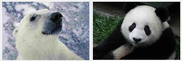 Panda_Polar_Love