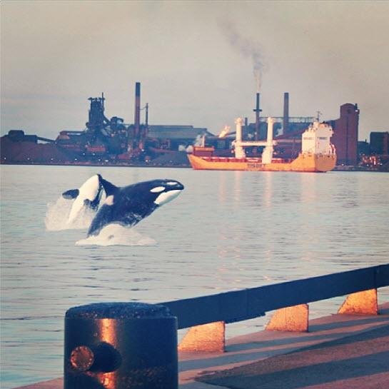 Steel_Orcas