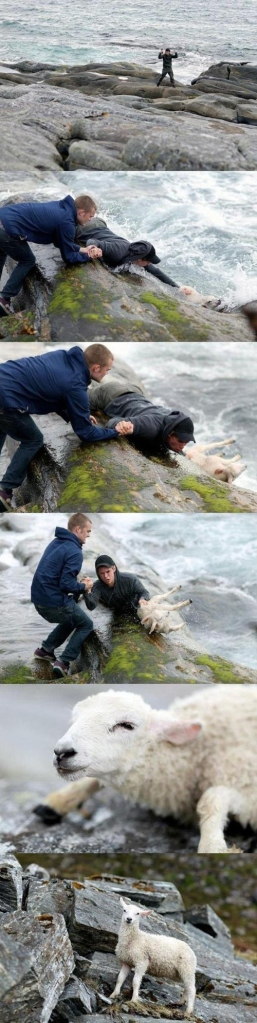 Men Save Cute Goat